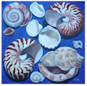 Ten Shells on Blue Background