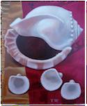Three Shells on a Sari